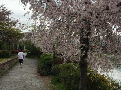 4月 京都、滋賀の旅